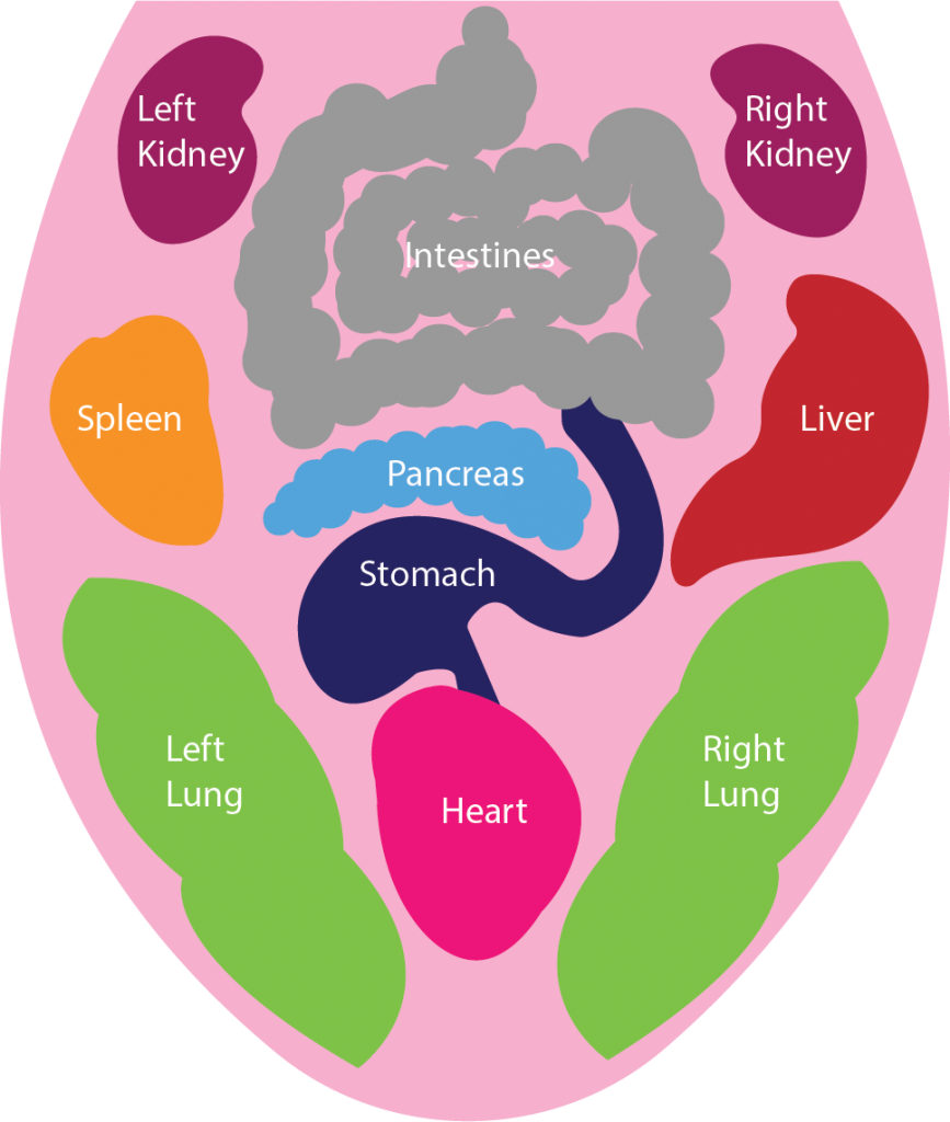 Tongue Diagram Tongue Diagnosis Diagram
